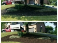 Before After Mulch 2