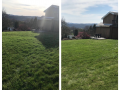Grass Before and After